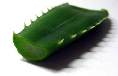 Aloe para acabar con el acne